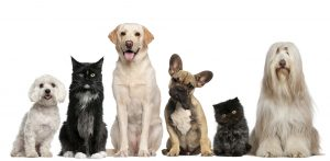 pet-store-franchises-for-sale