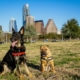best locations to start a dog business